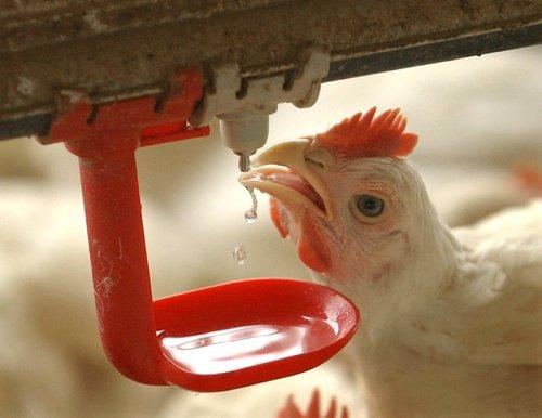 μεταχειρισμένος εξοπλισμός πτηνοτροφείου